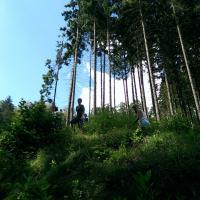 podhled les